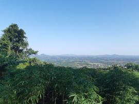 Chácara / sítioVenda em São José do Hortêncio no bairro Centro