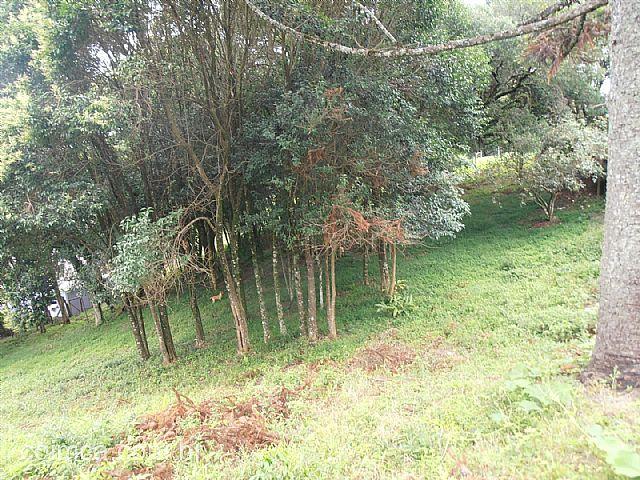 Terreno #238v em Caxias do Sul